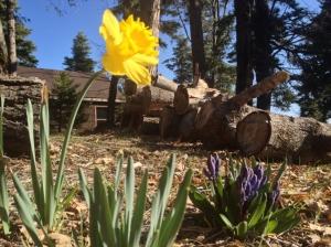 Spring isn't far away!