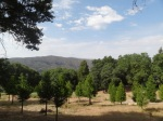 palomar mountain vacation rental, ponderosa log cabin