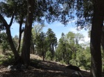 lots and land for sale palomar mountain
