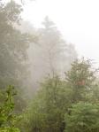 Rain Day Bill Aanestad Palomar Mountain