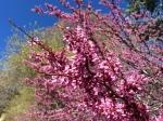 East Grade Spring Color Palomar Mountain