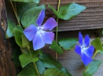 Vinca at Cabin Fever vacation rental palomar mountain