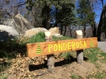 ponderosa log cabin vacation rental