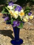 Palomar Mountain Daffodils