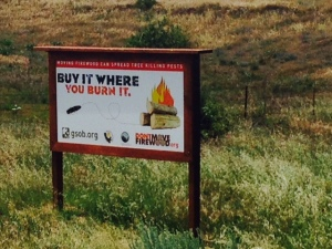 buy it where you burn it, gold spotted oak borer