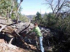 pushing tree