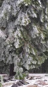 barbs snow