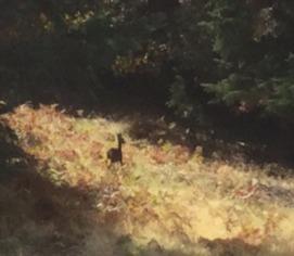 deer on lot sm.jpg