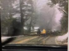tree-across-road