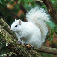 158520941.gCM3UjvU.white_squirrel29