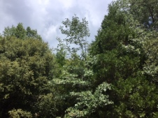 oak photo