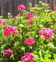 paulas flowers