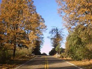 Fall for listings..