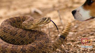 dog-vs-snake-1290x726 (1)